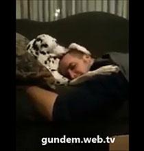 Uyuyan sahibini seven köpek
