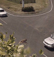 Trafikte diğerleri hata yapar,sen yavaş git!