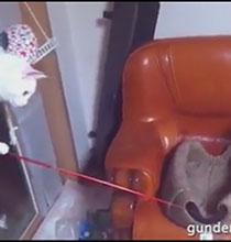 Olta Kullanmayı Öğrenen Kurnaz Kedi